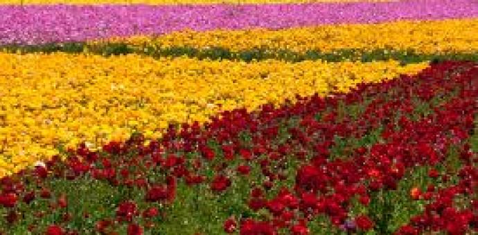 Tường Lưu: Một Mùa Xuân Đời Đời