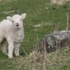 Chiên Lạc Trở Về