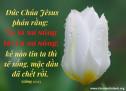 Lời Chúa Mỗi Ngày: Giăng 11:25