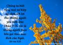Lời Chúa Mỗi Ngày: Rô-ma 8:28