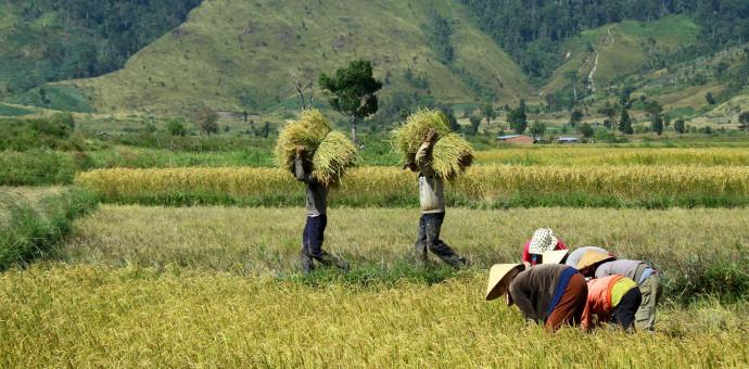 Thánh Ca: Bringing in the Sheaves – Gánh Lúa Về
