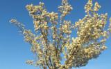 Giê-xu Là Mùa Xuân