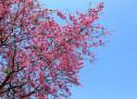 Xuân Đến Mừng Vui