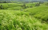 Thánh Ca: Gánh Lúa Về