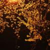 O Holy Night – Đêm Thánh