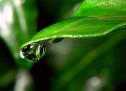 Thánh Ca: There Shall be Showers of Blessing  – Cơn Mưa Phước Lành