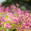 Mùa Xuân Hạnh Phúc