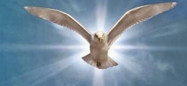 Bông Trái Của Đức Thánh Linh