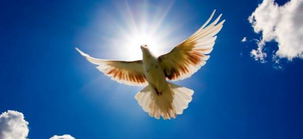Bởi Đức Thánh Linh