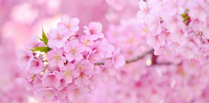 Tùng Sơn: Ý Xuân