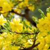 Lời Tạ Ơn Mùa Xuân