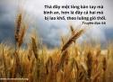 Lời Chúa Mỗi Ngày: Truyền Đạo 4:6