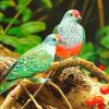 Chim Hoa và Người