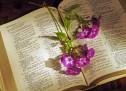 Cùng Học Kinh Thánh:  I Cô-rinh-tô 7:6-16
