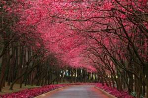 CherryStreet