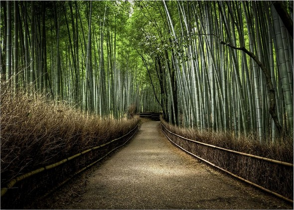 BambooPath