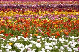 FlowerField_03