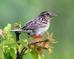 sparrow_01