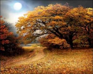 fall_11s