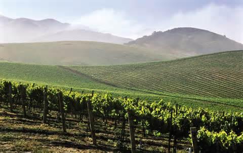 vineyard_08