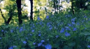 flower_blue_s
