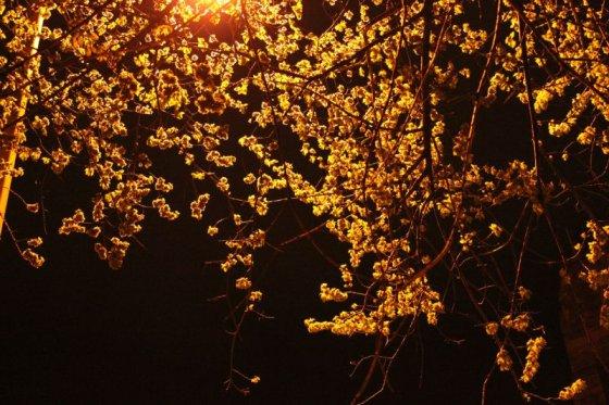 springnight_02