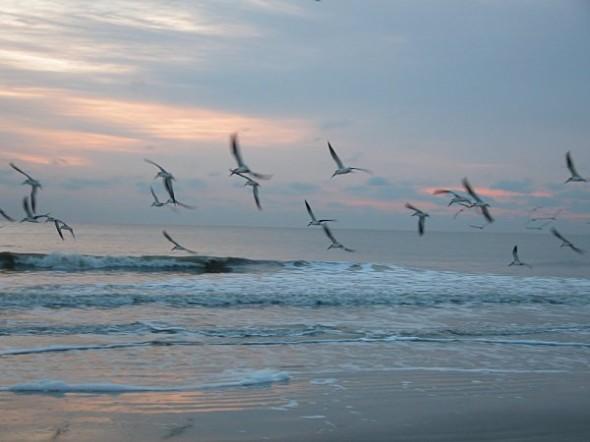 BirdsOcean
