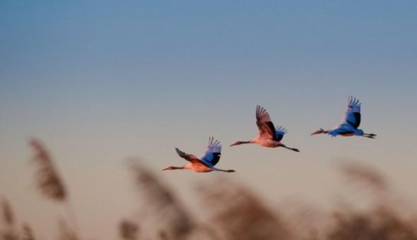 Birds_04