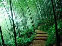 path_09