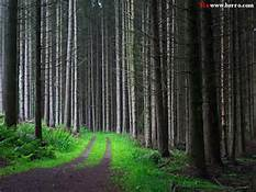 path_16