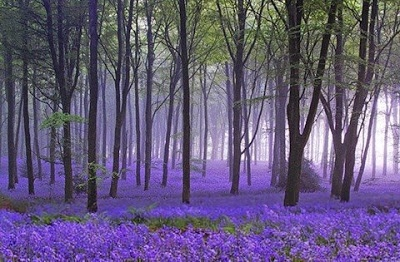 forest_purple_01