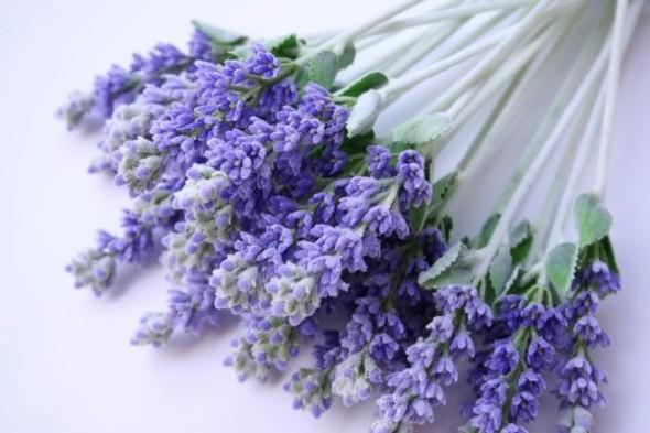 Lavender_flower_03