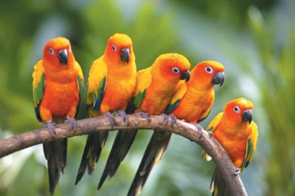 birds_family_03
