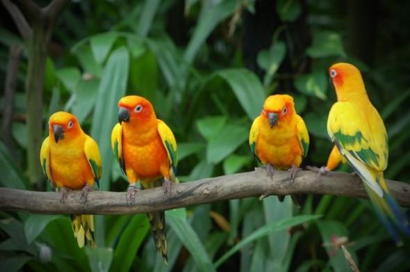 birds_family_06