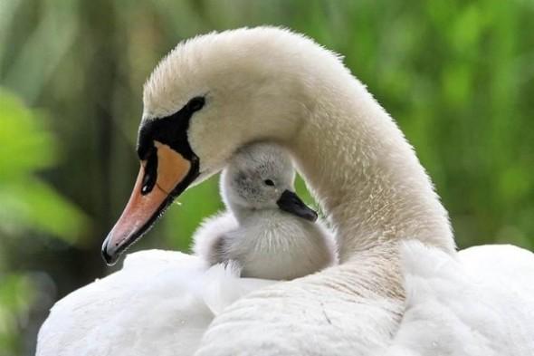 birds_family_09