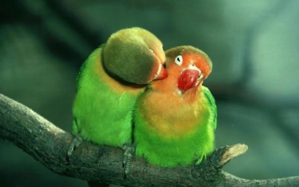birds_pair_02