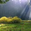 Tùng Sơn: Tiếng Khóc Trên Đồi