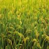 Tùng Sơn: Mùa Mới