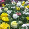 Kinh Tạo: Xuân