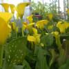 Thánh Ca Mới: Hãy Ngắm Những Đóa Hoa