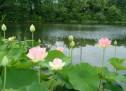Tùng Sơn: Chúc Thọ Thân Sinh