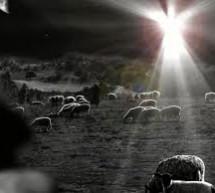 Thơ Tường Lưu: Sáng Danh Thiên Chúa
