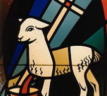 Tìm Hiểu: Chiên Con Của Đức Chúa Trời