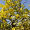 Linh Cương: Tình Xuân