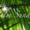 Tìm Hiểu: Lễ Lá