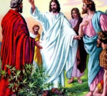 Cùng Học Kinh Thánh:  Lu-ca 10:10-24