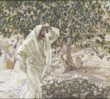 Cùng Học Kinh Thánh – Lu-ca 13:1-9