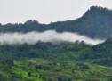Tùng Sơn: Những Bước Chân Đi