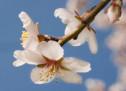 Kiến Thức: Hoa Xuân Trong Thánh Kinh