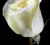 Mục sư Võ Ngọc Thiên Ân: Tấm Lòng Người Mẹ